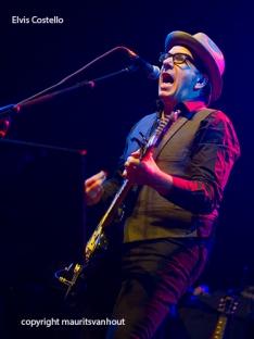 Elvis Costello live op Gent Jazz 2013