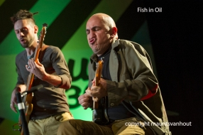 Belgrade jazz 2013, fish in oil